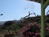 Garden_m_06