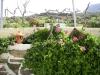 Garden_m_16