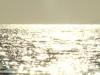 Landscape_29_m